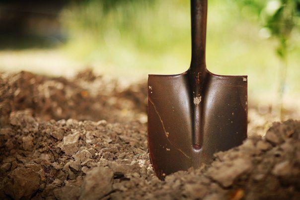 Удобрение почвы после сбора урожая