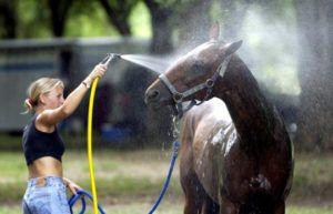 Многие лошади хотят чувствовать себя защищенными – для них первичен постоянный уход