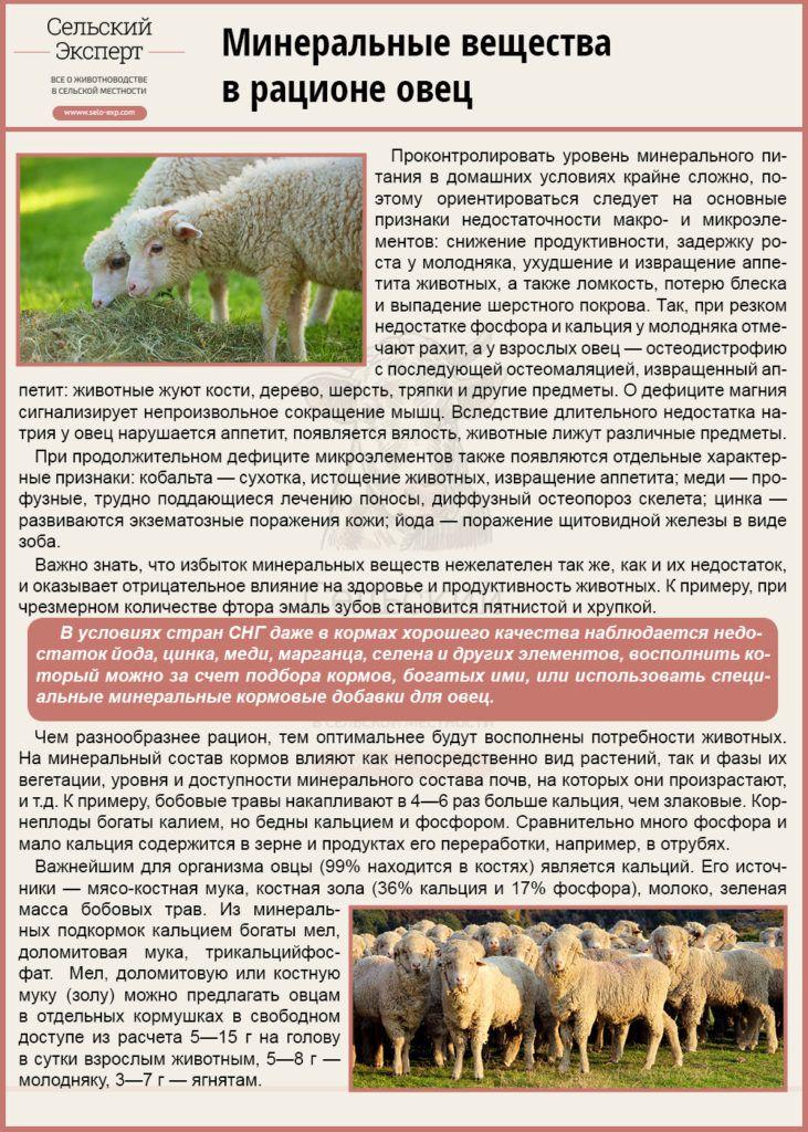 Минеральные вещества в рационе овец