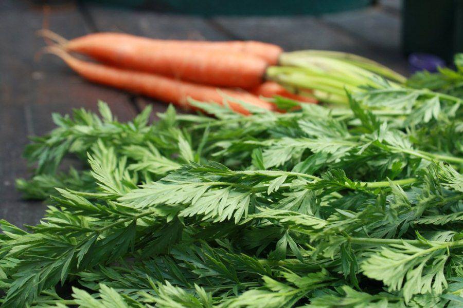 Нутрии любят морковную ботву