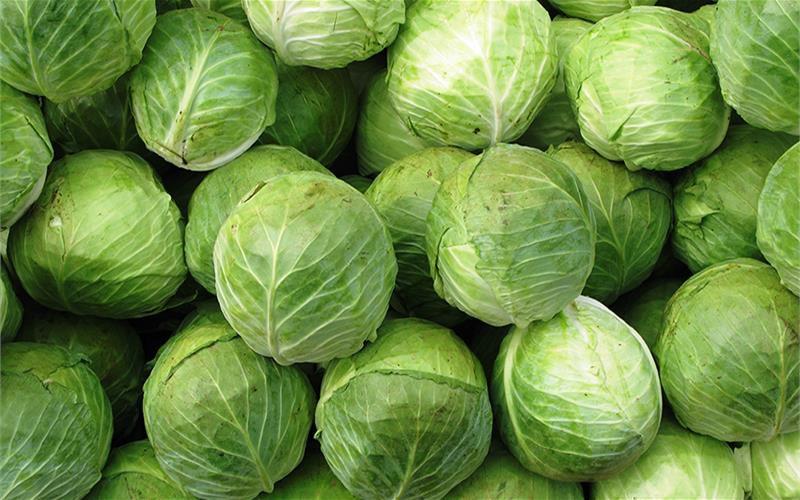 Нутрии с удовольствием будут есть капусту