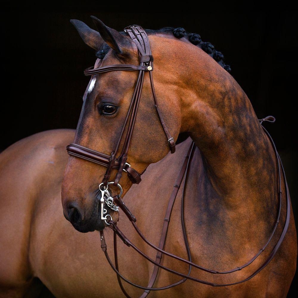 Амуниция для лошади своими руками: недоуздок и уздечка