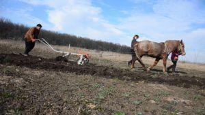 Запряженная лошадь пашет землю