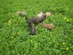 Кармалы с детства предпочитают питаться зеленой травой
