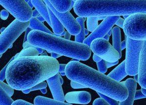 Биопроба зараженного материала на здоровых животных может выявить окончательный диагноз