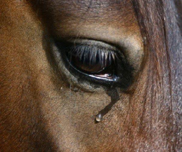 Еще один симптом - обильное слезотечение