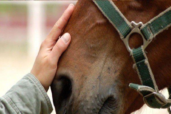 Оспа - серьезное заболевание, справиться с которым не сможет даже лошадь с хорошим здоровьем без должного лечения