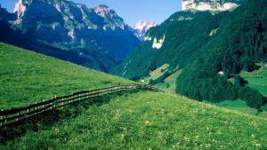 В начале пастбищного сезона рекомендуют выгуливать коз на хорошо освещенных территориях, расположенных на возвышенностях