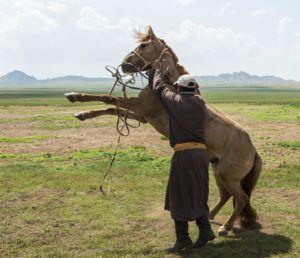 Взнузданный конь