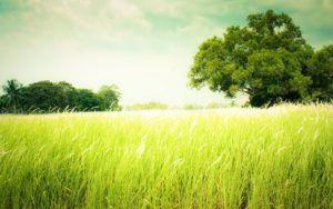 Козы хорошо ориентируются в растительном мире и являются травяными гурманами: они выбирают самую вкусную и сочную траву. Поэтому следует избегать выпаса на водянистых территориях, на которых произрастают растения, лишенные вкусовых качеств.
