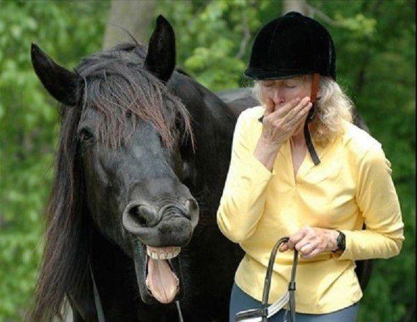 Лошадиный грипп передается и человеку, однако, протекает почти бессимптомно