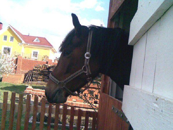 Новые лошади обязательно должны выдерживаться на карантине