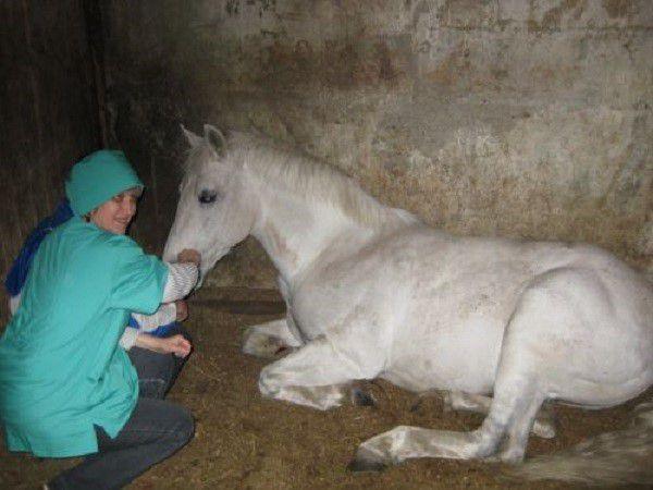 Лошадь с малокровием постоянно испытывает слабость