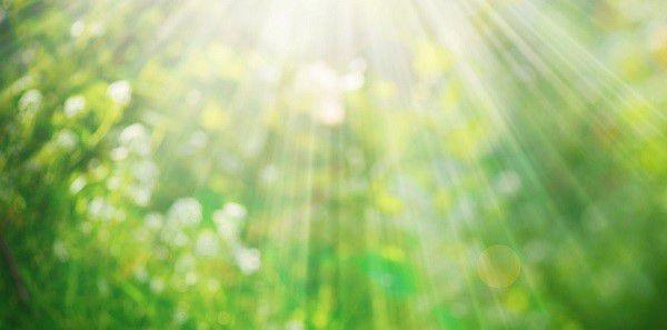 Солнечные лучи способны уничтожить вирус энцефаломелита