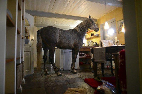 Больную лошадь следует содержать в тепле