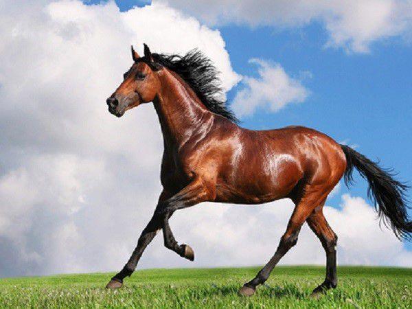 Умение вовремя определить симптомы болезни - залог успешности коневодческого бизнеса