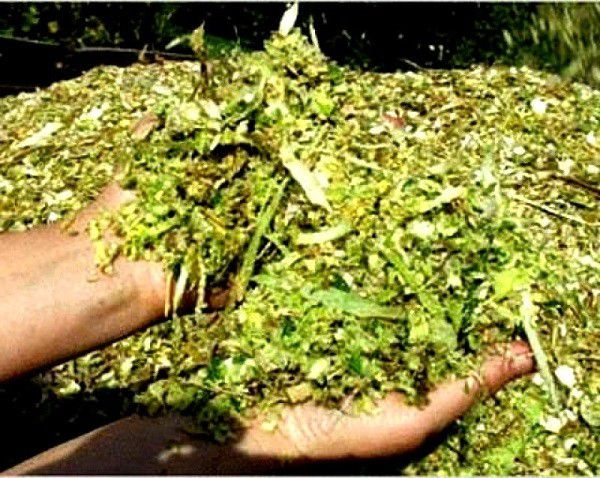 Силос может получиться кислым, если не подвялить траву прежде, чем приступить к его приготовлению