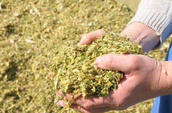 Добавив в силос размельченную солому, вы сохраните полезные травяные соки, обычно вытекающие из продукта
