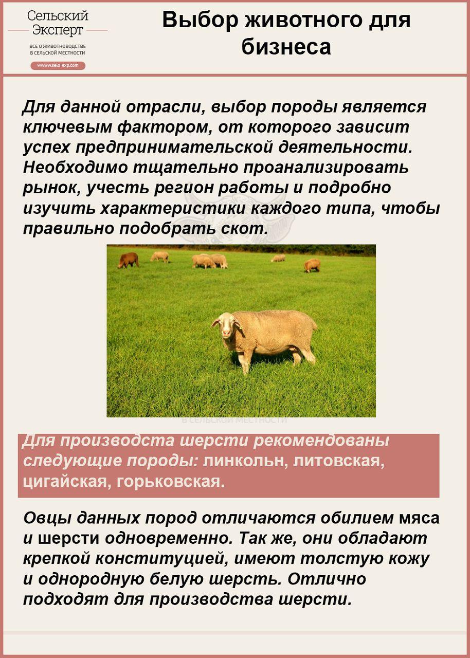 Выбор животного для бизнеса
