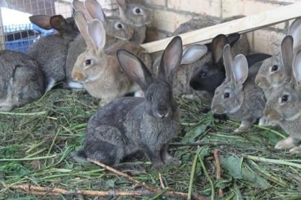 Какие продукты можно получить от кроликов?