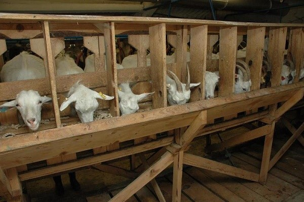 Дом для коз носит название «козлятник»