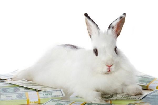 Этот бизнес не обязательно завязывать на производстве мяса, можно просто продавать крольчат