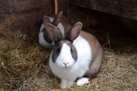Помещение, в котором будут проживать кролики, придется хорошенько подготовить