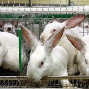 Кормление кроликов важно осуществлять по всем правилам