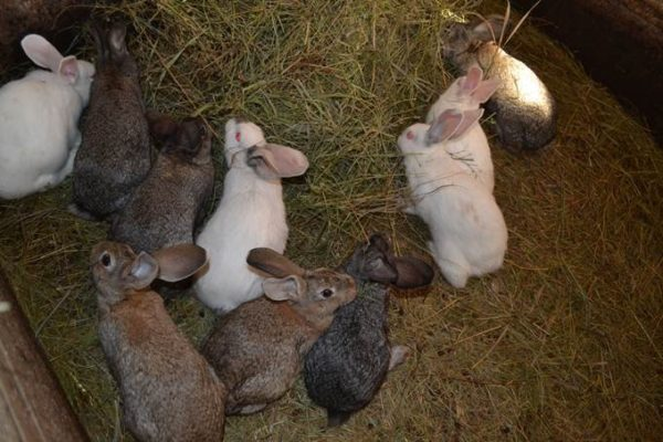 Проживая все вместе, животные могут заражаться болезнями в один момент