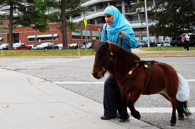 В некоторых странах лошади успешно используются в качестве поводырей