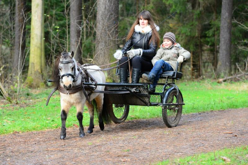 В упряжке американские миниатюрные лошади работают достаточно редко