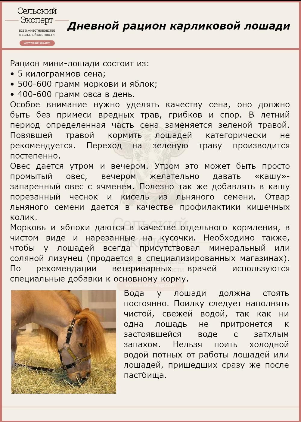 Дневной рацион карликовой лошади