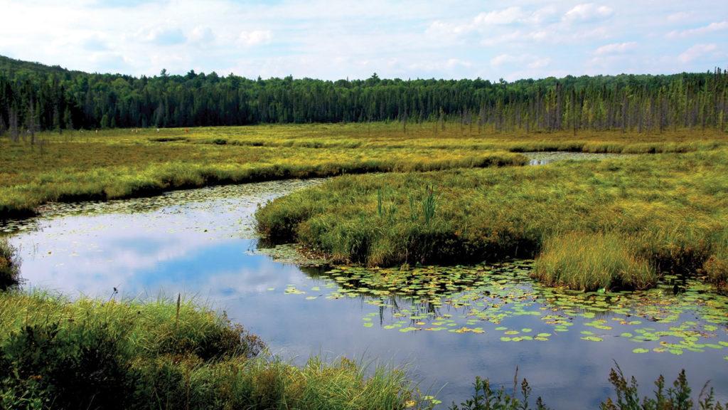 Привыкшие к засушливому климату овцы будут неготовы к встрече с болотистыми и сырыми пастбищами