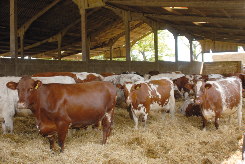 Комфортные условия содержания коров значительно уменьшают риск возникновения заболеваний