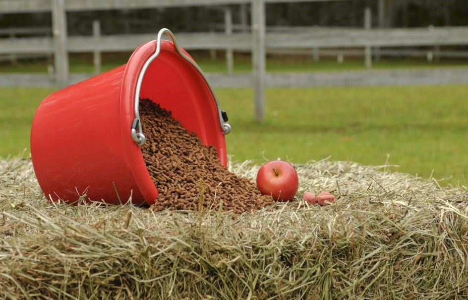 Концентрированные корма очень питательны, однако при незнании меры приводят к ожирению животных