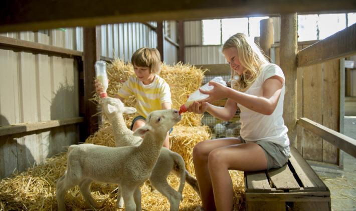 Кормление молодняка искусственным молоком допускается лишь при отсутствии материнского молока