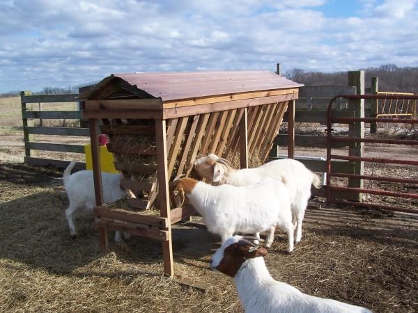 Кормушки для овец своими руками видео