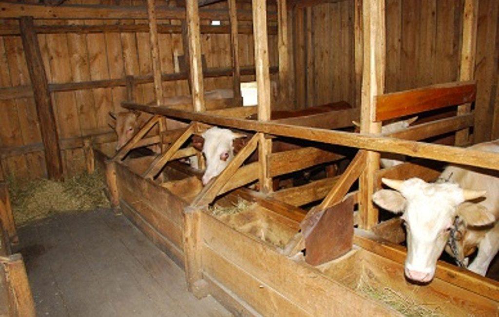 Коровы в деревянном стойле