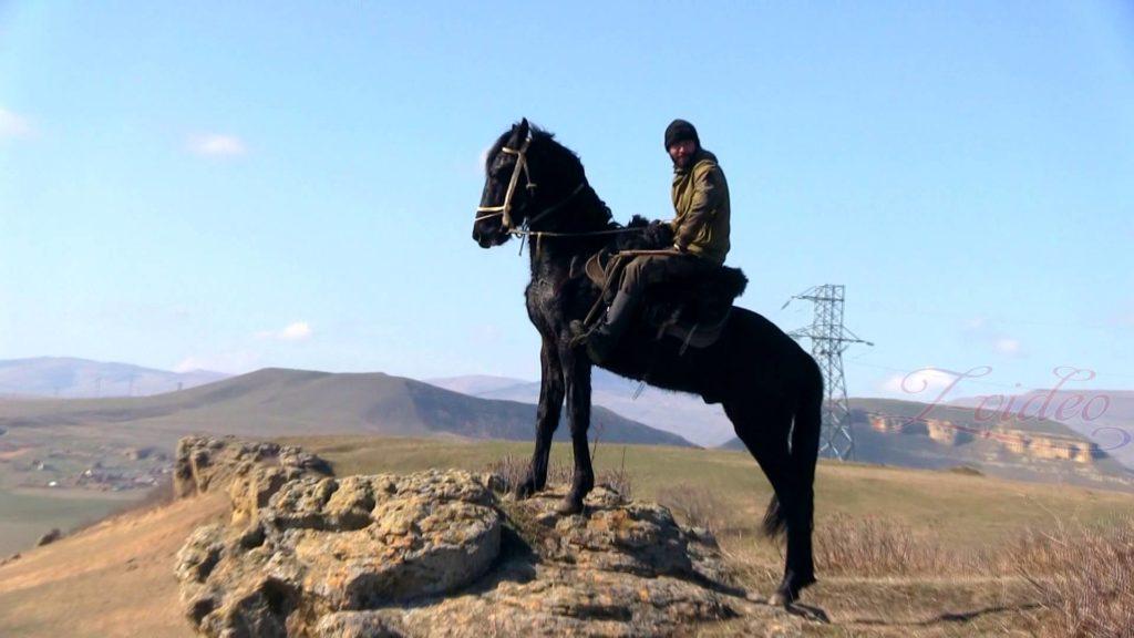 Крепкие копыта карачаевских лошадей - результат длительного отбора