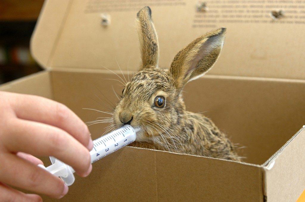 Кролики получают смесь с помощью специальных шприцов, аккуратно впрыскивающих состав