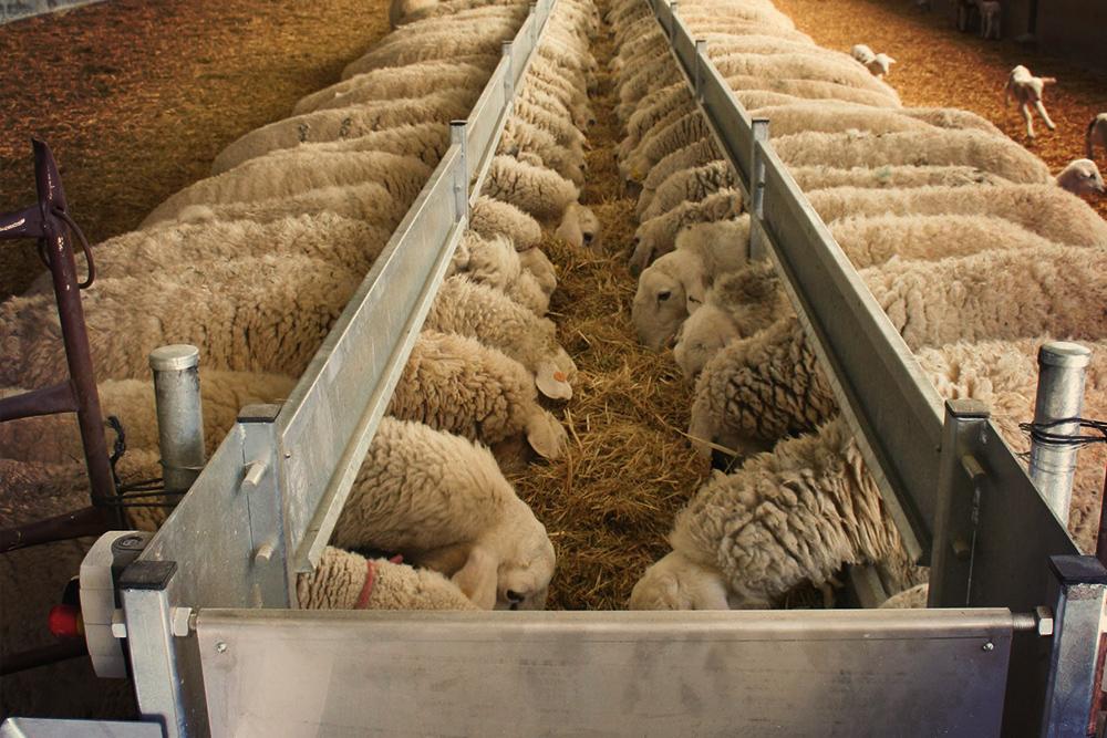 К металлическим кормушкам овцы проявляют, как правило, меньше внимания