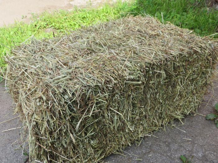Луговое сено является основной питания карачаевских лошадей