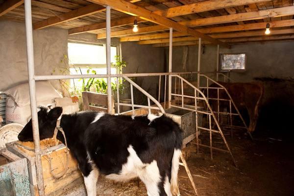 Небольшой коровник на несколько коров
