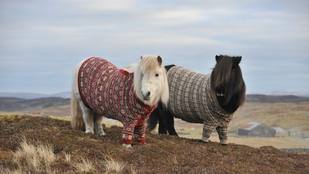 Недостаток кальция в организме лошади затормаживает ее рост и вредит здоровью