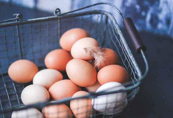Одна взрослая особь котляревской породы за год может снести до 250 яиц