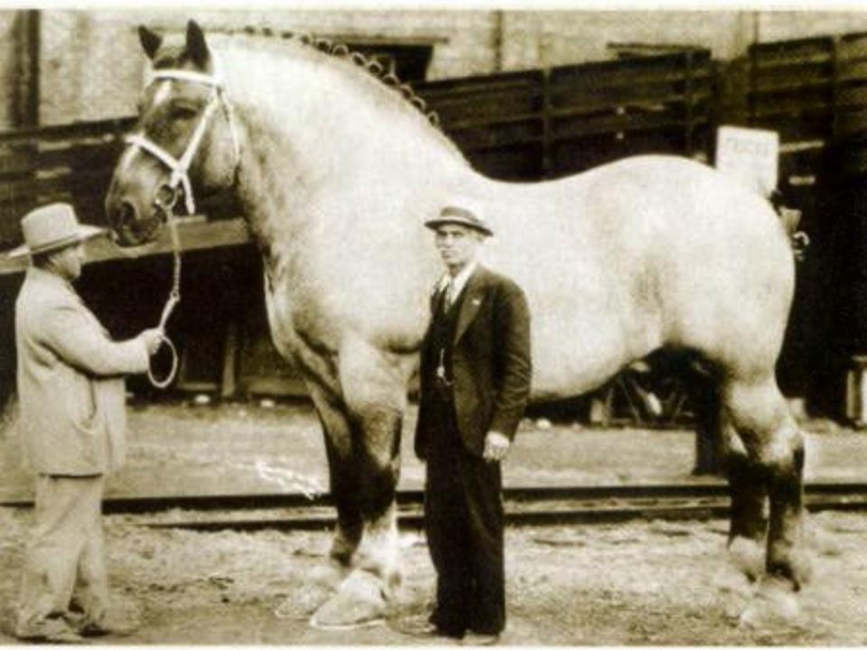 Одна из самых ранних фотографий Першерона