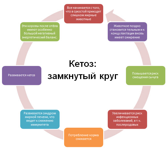 Основная сложность лечения кетоза на практике