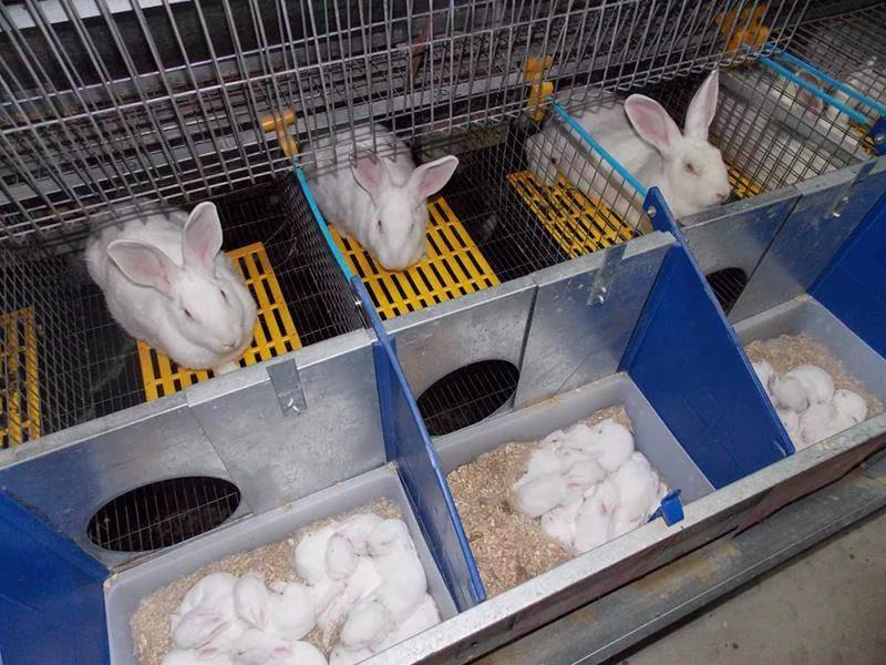 Отверстие для прохода матери не должно позволять крольчатам выпадать из маточника