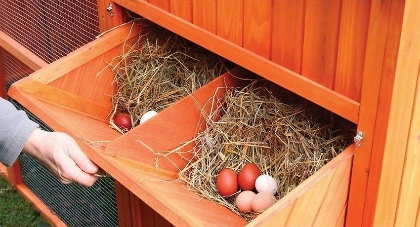 Пример оформления гнезд для кур-несушек