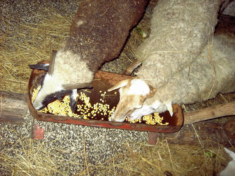 При правильном подходе концентраты расходуются намного медленней прочих видов корма